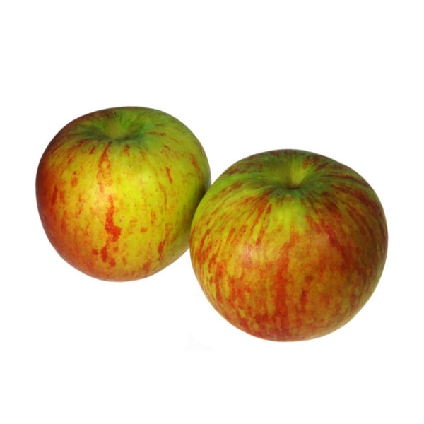 Apple coxes